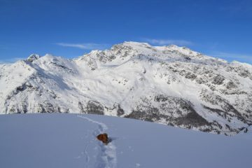Zeus arranca nella neve non portante
