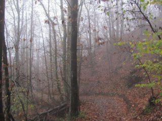 Salendo da Voltaggio lungo la mulattiera nel bosco