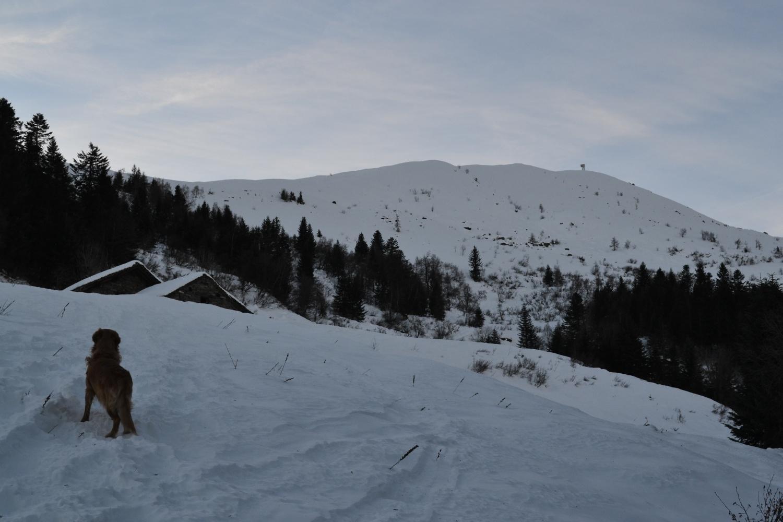 arrivo all'Alpe Selvaccia (1556 m). Sullo sfondo il Monte Bo