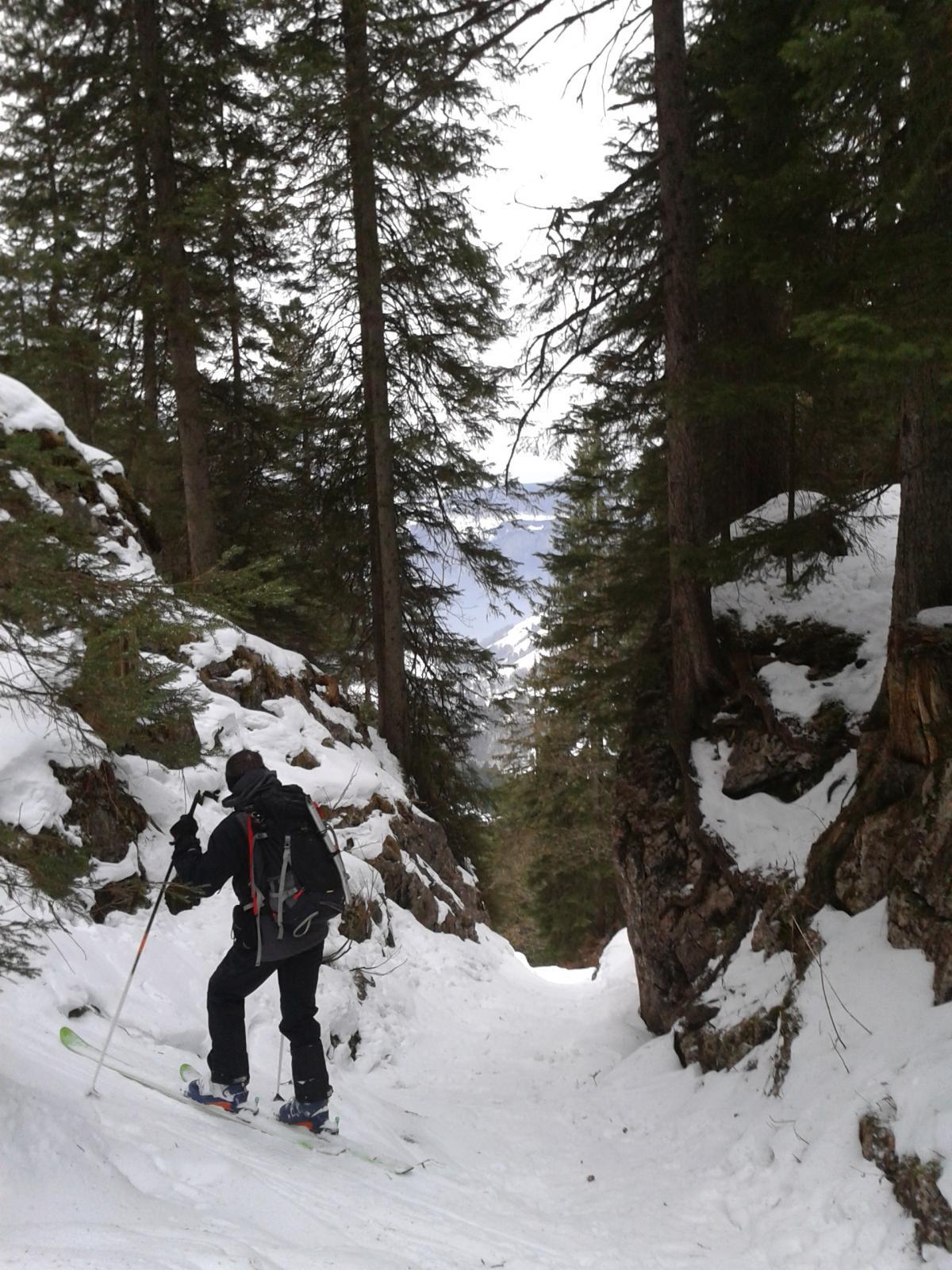 Nel bosco seguendo il sentiero