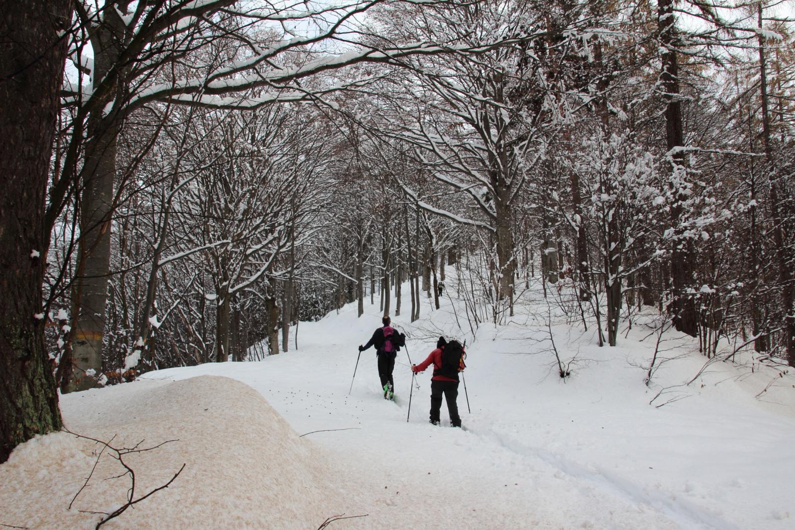 scialpinista locale e Maurizio in azione nel bosco sopra il Gias Sottano Baus di Lula (21-12-2013)