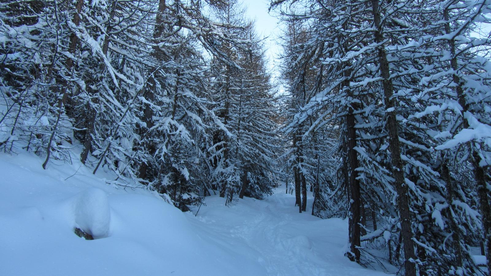 Bel bosco innevato
