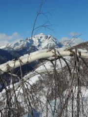 monte Cistella dietro una betulla piegata dalla neve