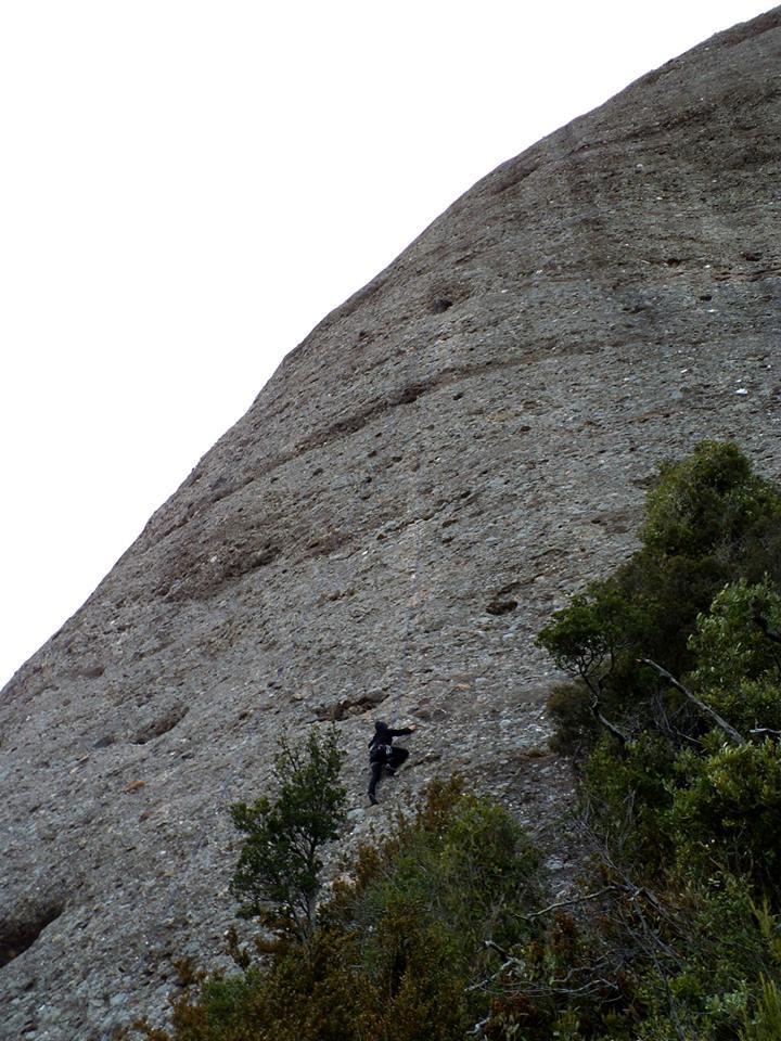 Panxa del Bisbe Casanellas-Ludwing 2014-01-01