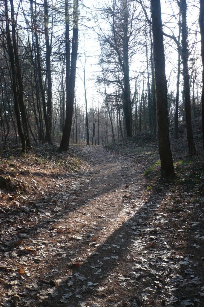 Bel sentiero nei boschi