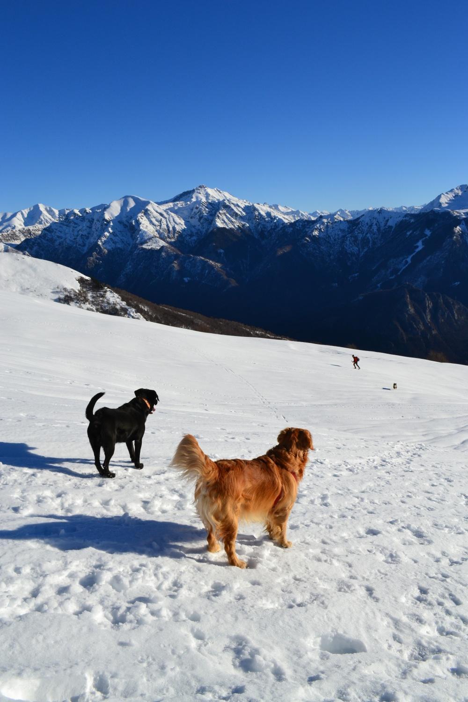incontri canini