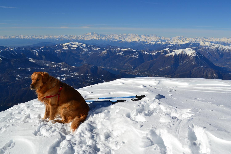 Zeus in vetta con il Monte Rosa sullo sfondo