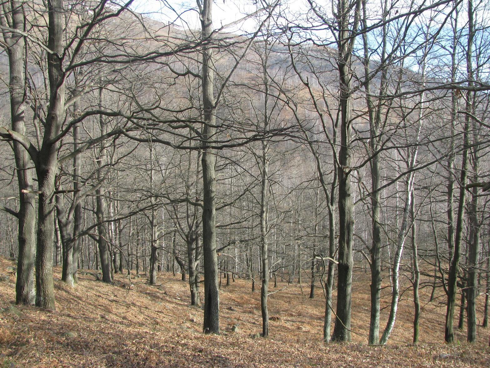 Bel bosco di querce