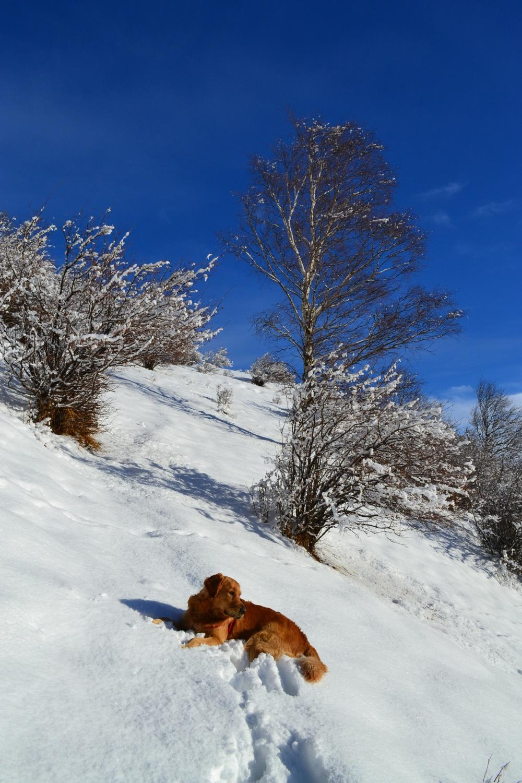 molta neve fresca