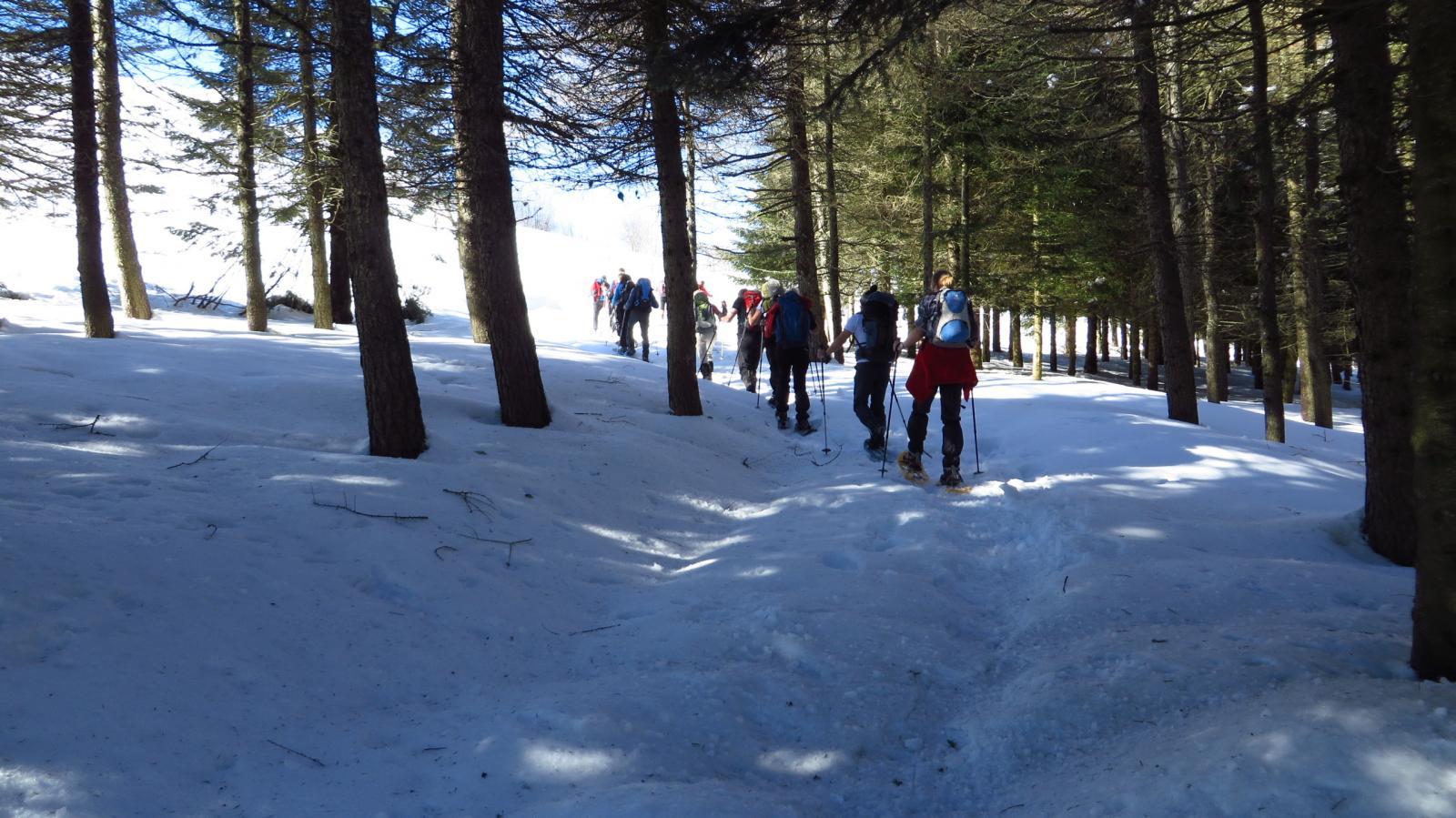 costeggiando il bosco sopra il Colle di San Bartolomeo