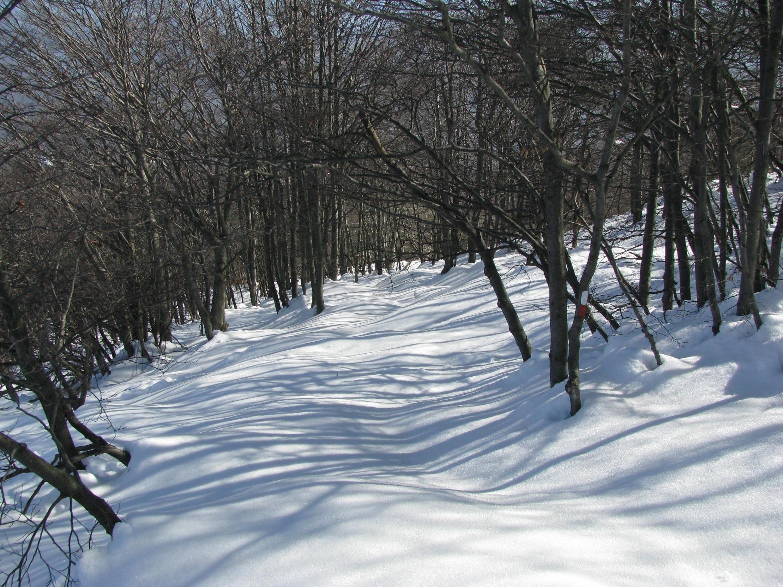Discesa nel bosco verso il Nero