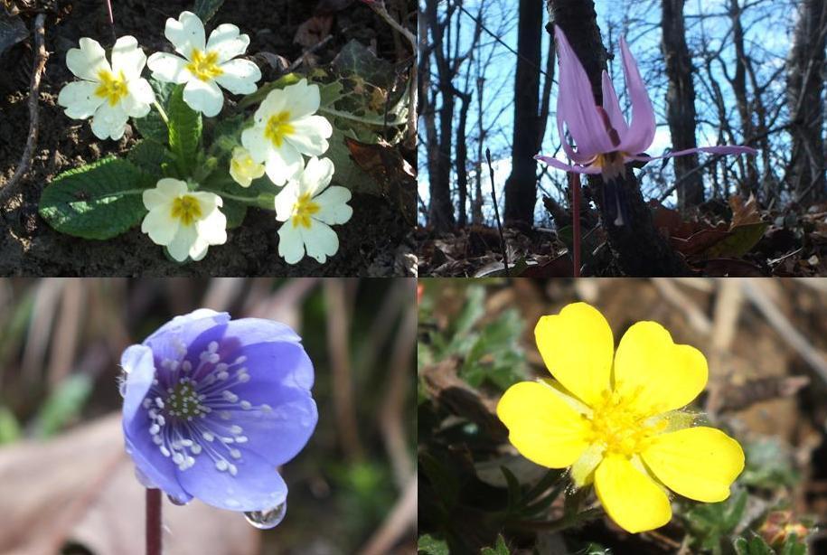 Cenni di Primavera
