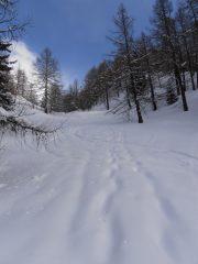 08 - Sciata magnifica anche nel bosco