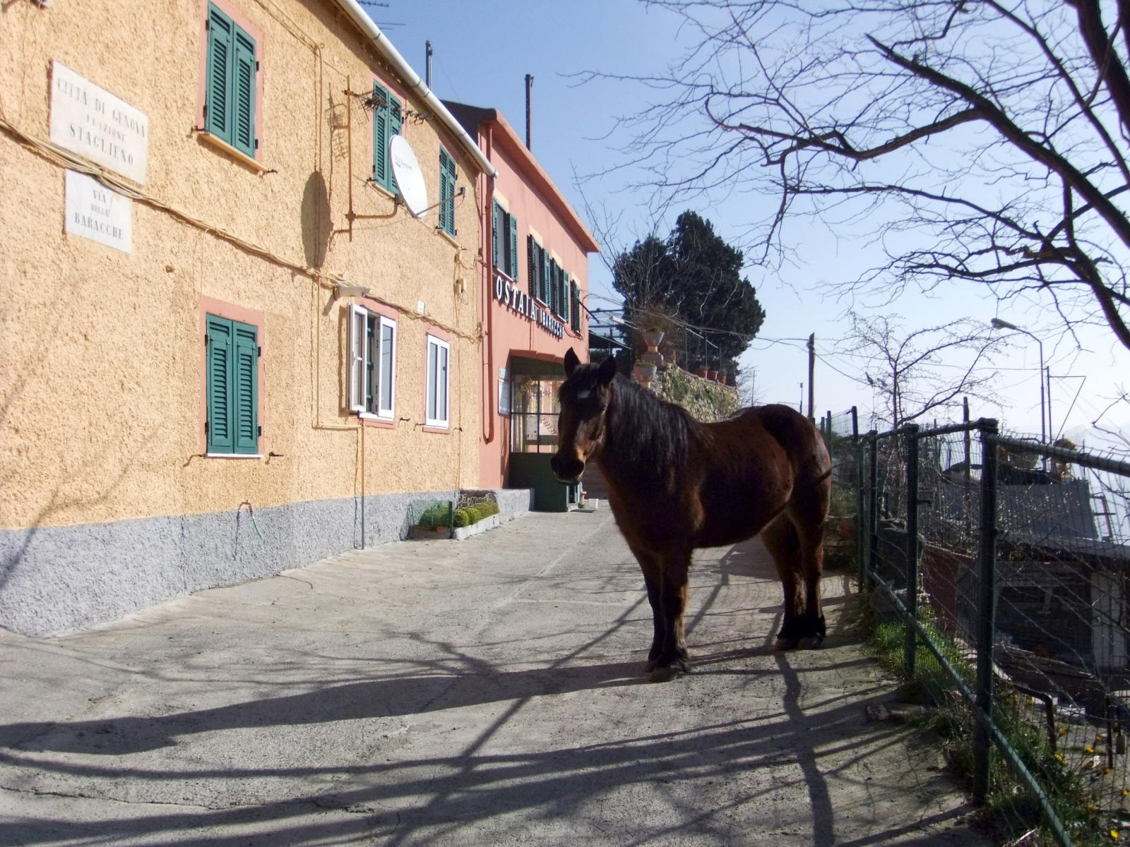 Cavallo all'Osteria delle Baracche