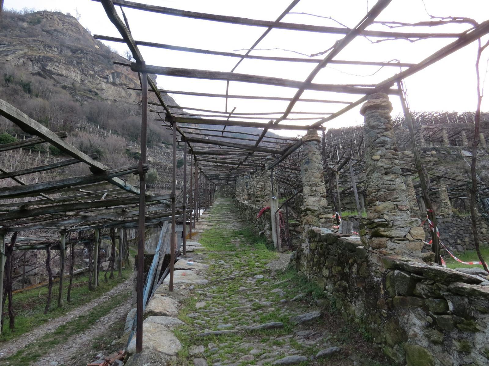 Salendo sotto le vigne dopo Cesnola