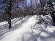 da 15 a 20 cm di neve fresca