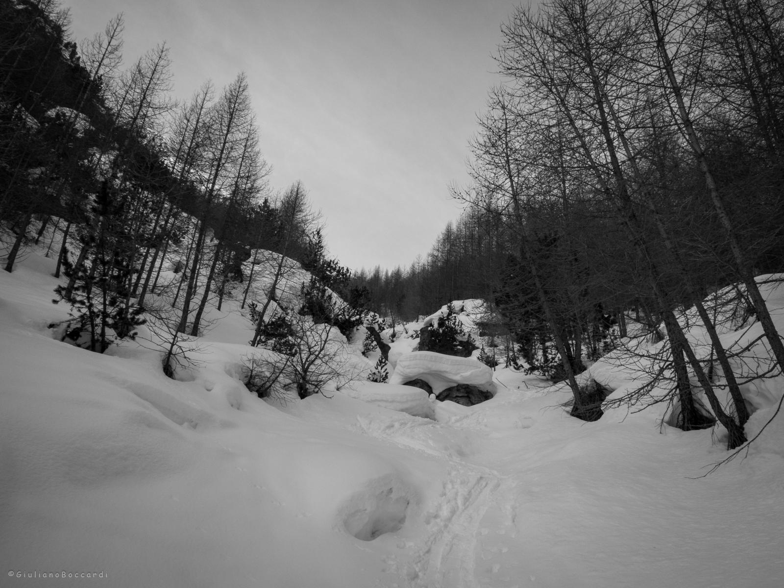 La boschina iniziale