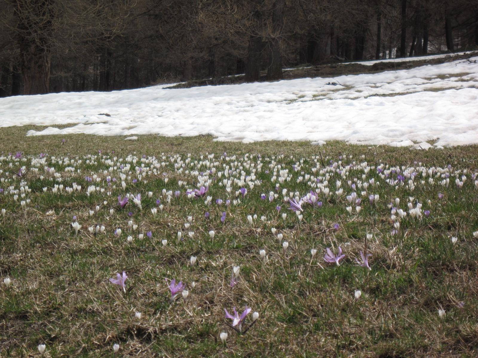 la primavera avanza