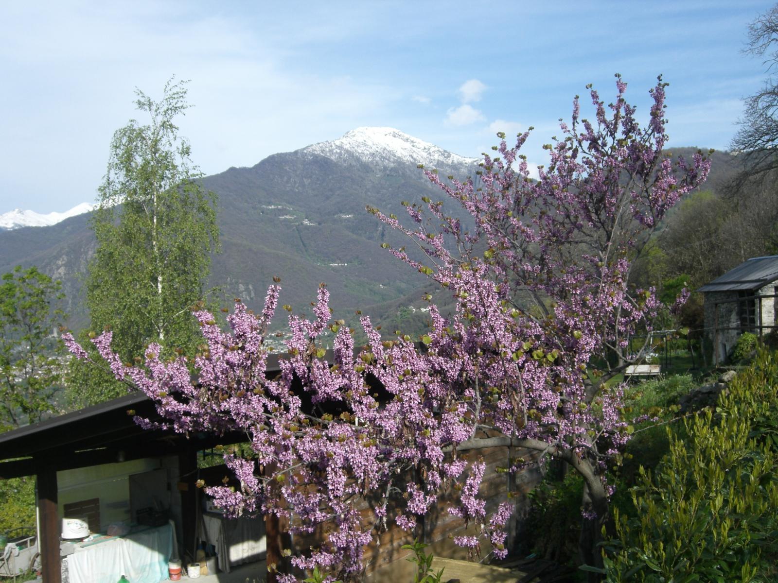 Primavera a Navetta