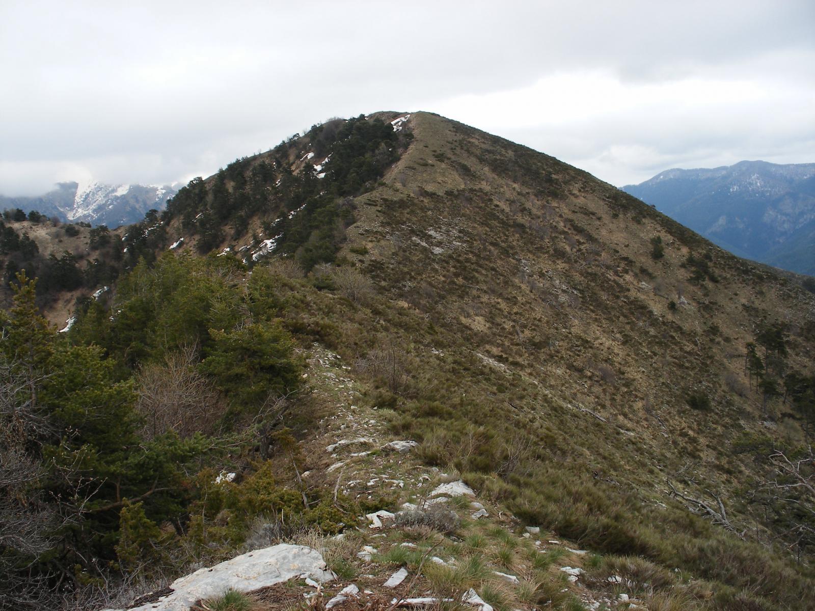 Monte Bergiorin