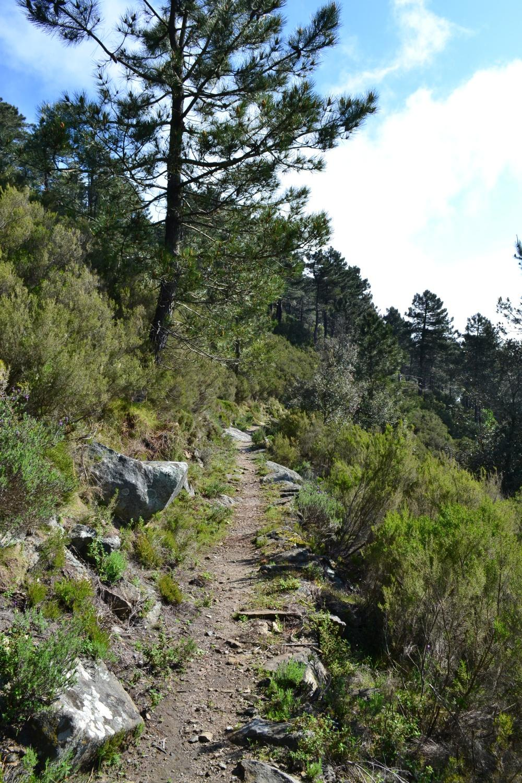 tratto del sentiero salendo al Monte Maolo