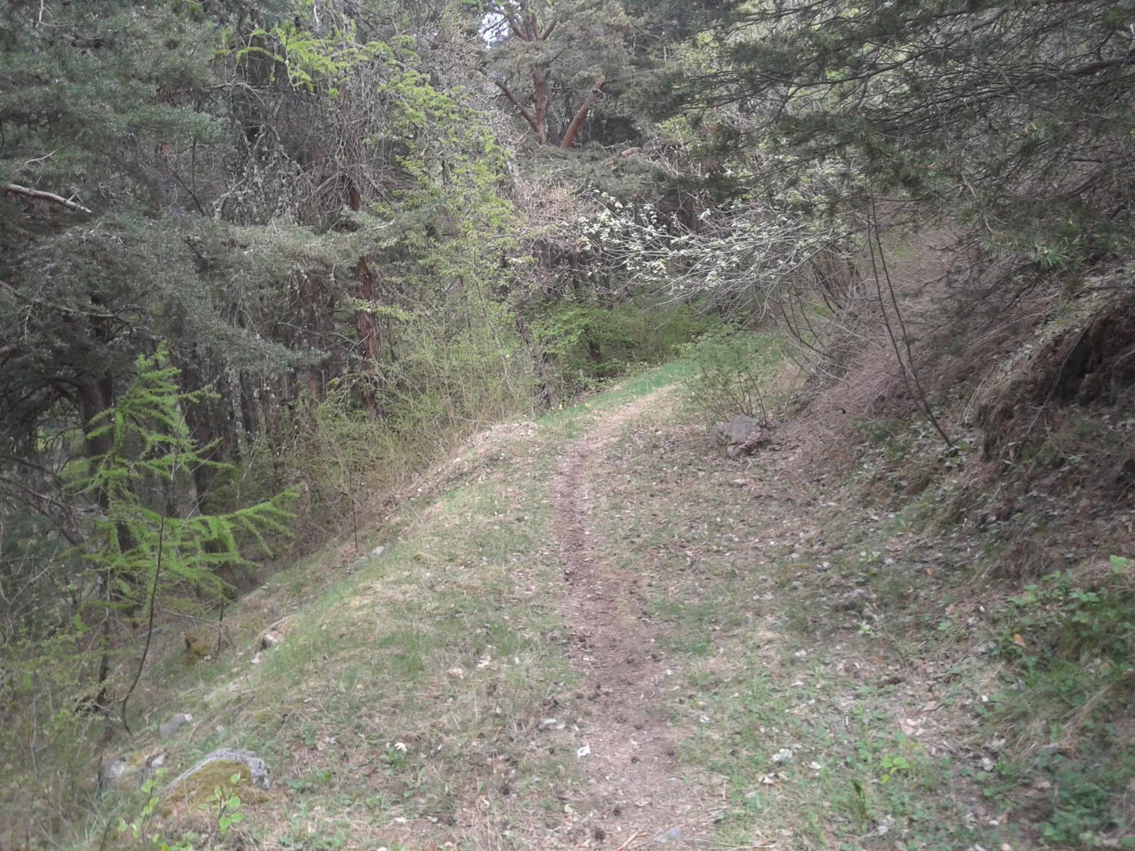 il bel sentiero di discesa