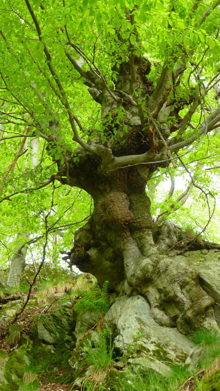la forza della natura a Chiale