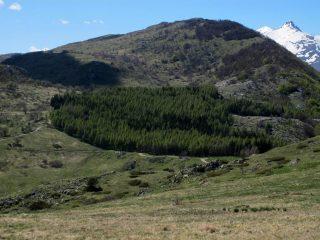 Armetta, Pizzo d'Ormea, sul bordo del bosco di pini Colle S.Bartolomeo