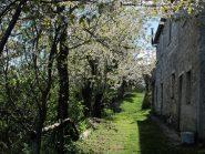 Il viale dei ciliegi che precede l'arrivo al Rifugio Pian dell'Arma