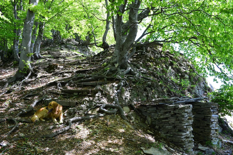 nel bosco poco prima di incrociare il sentiero che sale da Carbonera