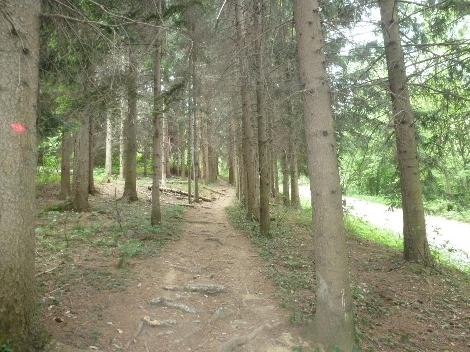 bel tratto di sentiero