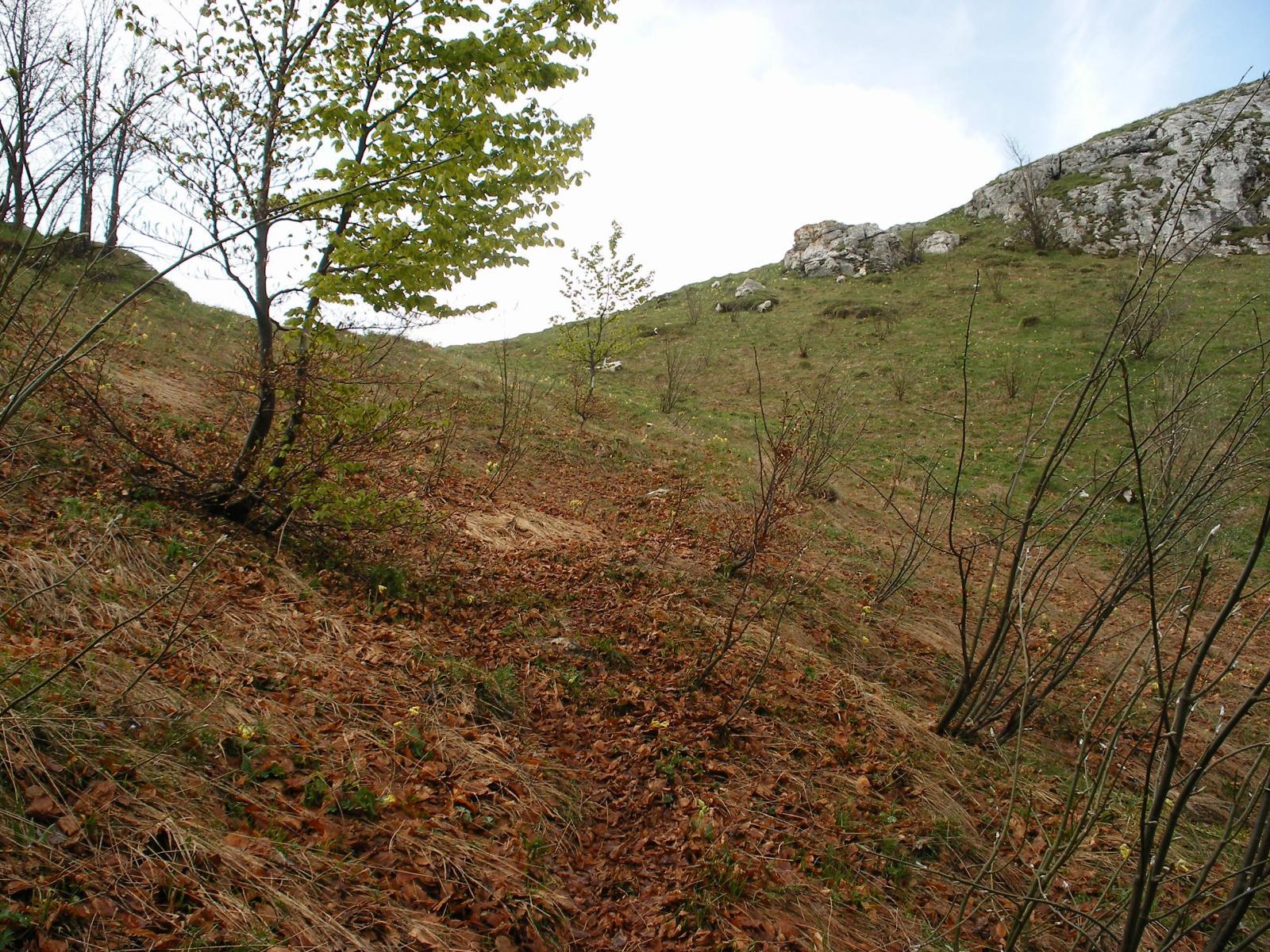 fuori dal bosco e in cresta