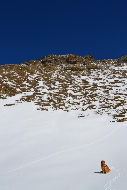 in direzione della rocciosa cima