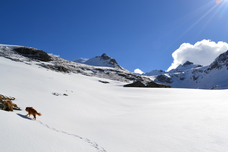 in prossimità dell'Alpe Lezan (2684 m)