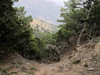 La zona boscosa del Mavri Thalassa