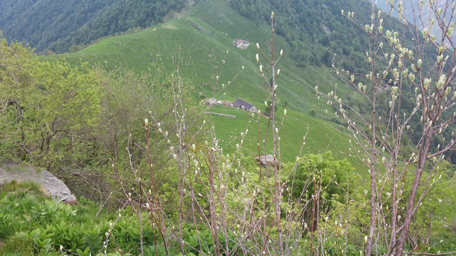 sopra l'ampia sella di Scotto (Casere ed Alpe Scotto)