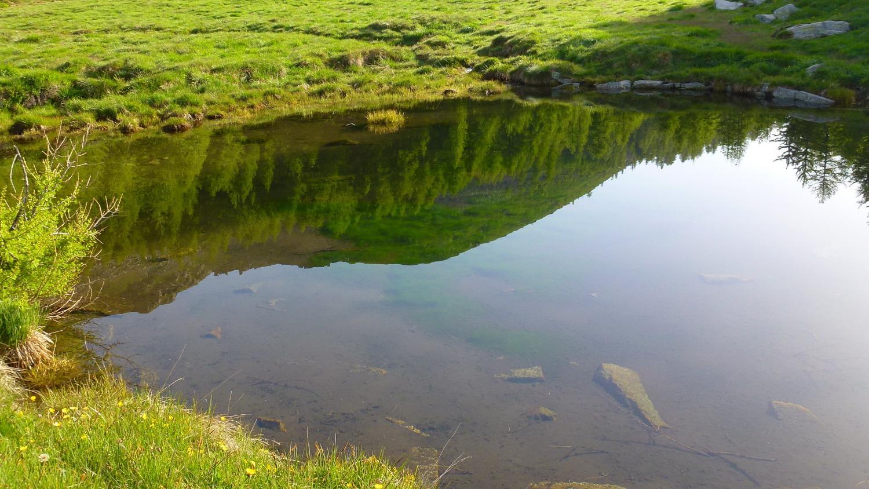 La Merola al laghetto di Pian del Brengi