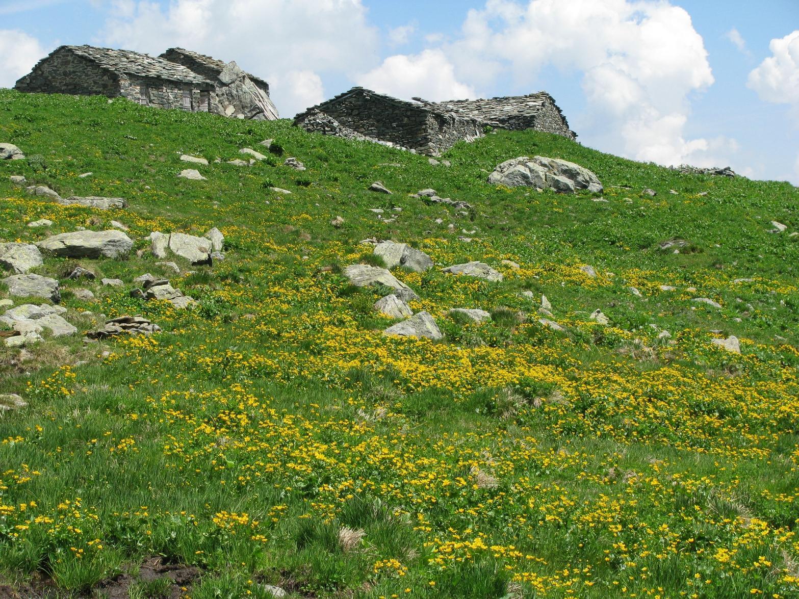 Alpe Pian del Roc