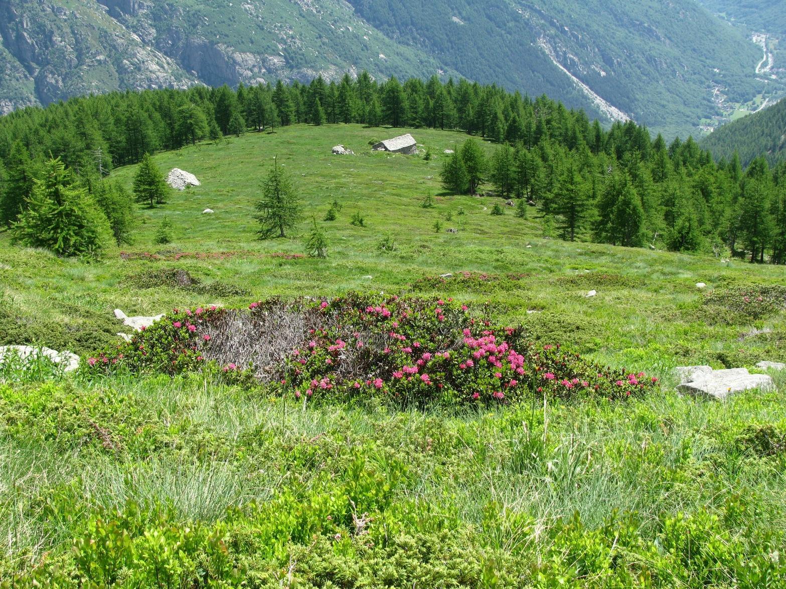 In discesa all' Alpe Testa di Deserta