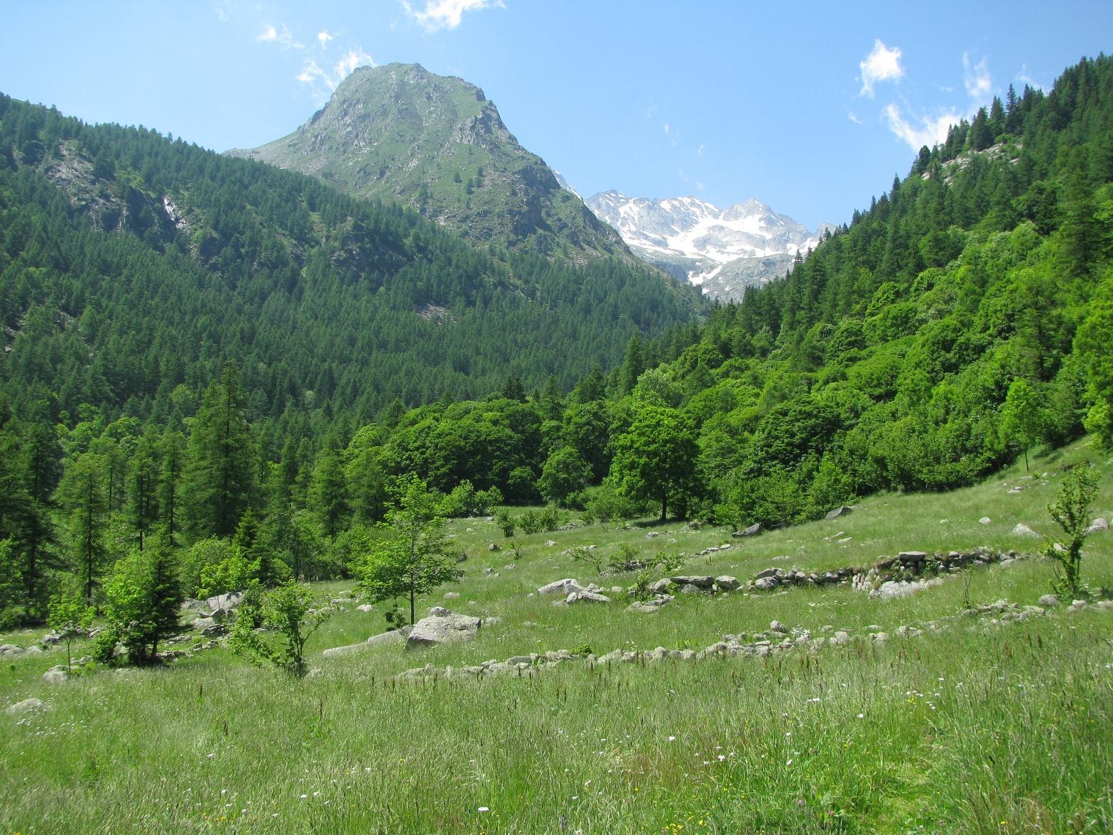 Rossa (Punta la) da Tressi per l' Alpe Gran Fumà e la dorsale SE 2014-06-20