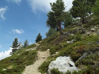 bel sentiero a inizio parte ripida del pendio