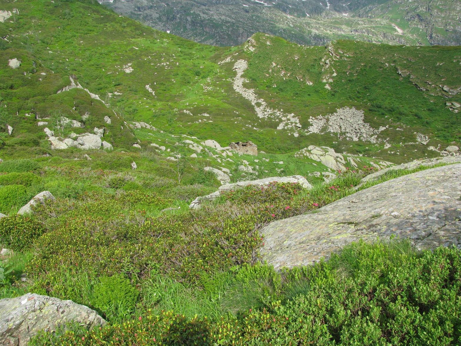 Leggera discesa all'Alpe Gui