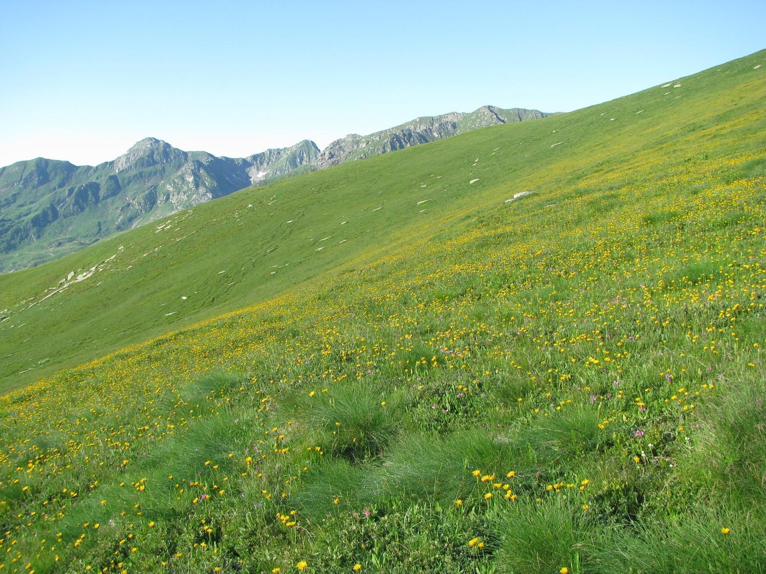 Salendo il Plateau fiorito della Cialma