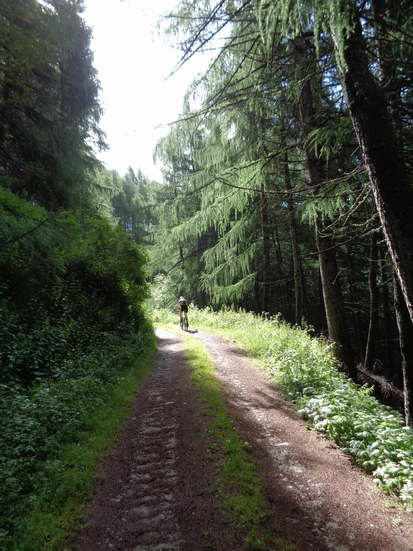 breve tratto boschivo