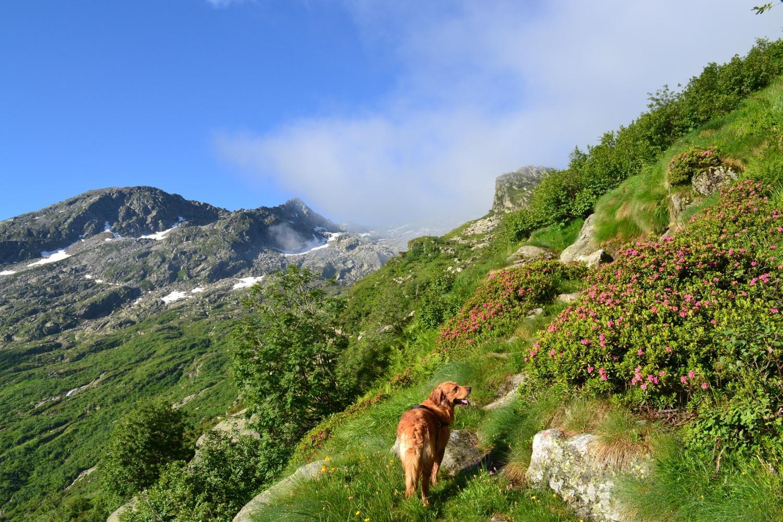 sul sentiero di salita tra qualche nebbia e belle fioriture di rododendri