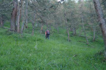 Fuori sentiero nel bosco