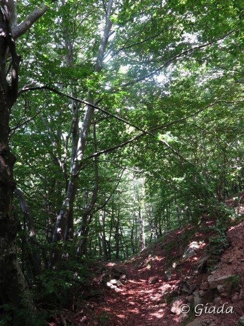 Nei boschi verso Viozene