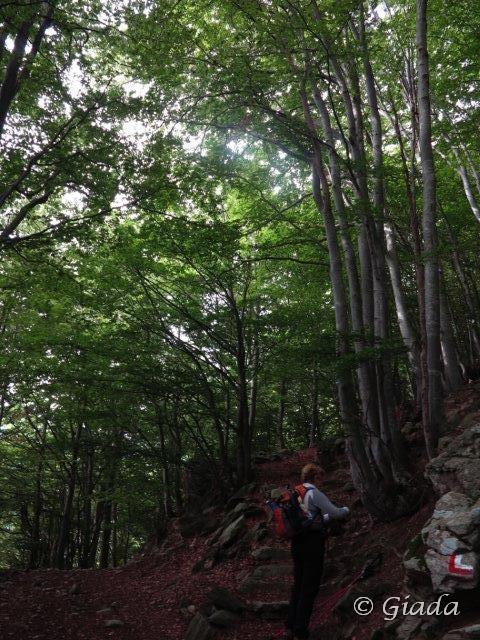Nel bel bosco sopra Chioraira