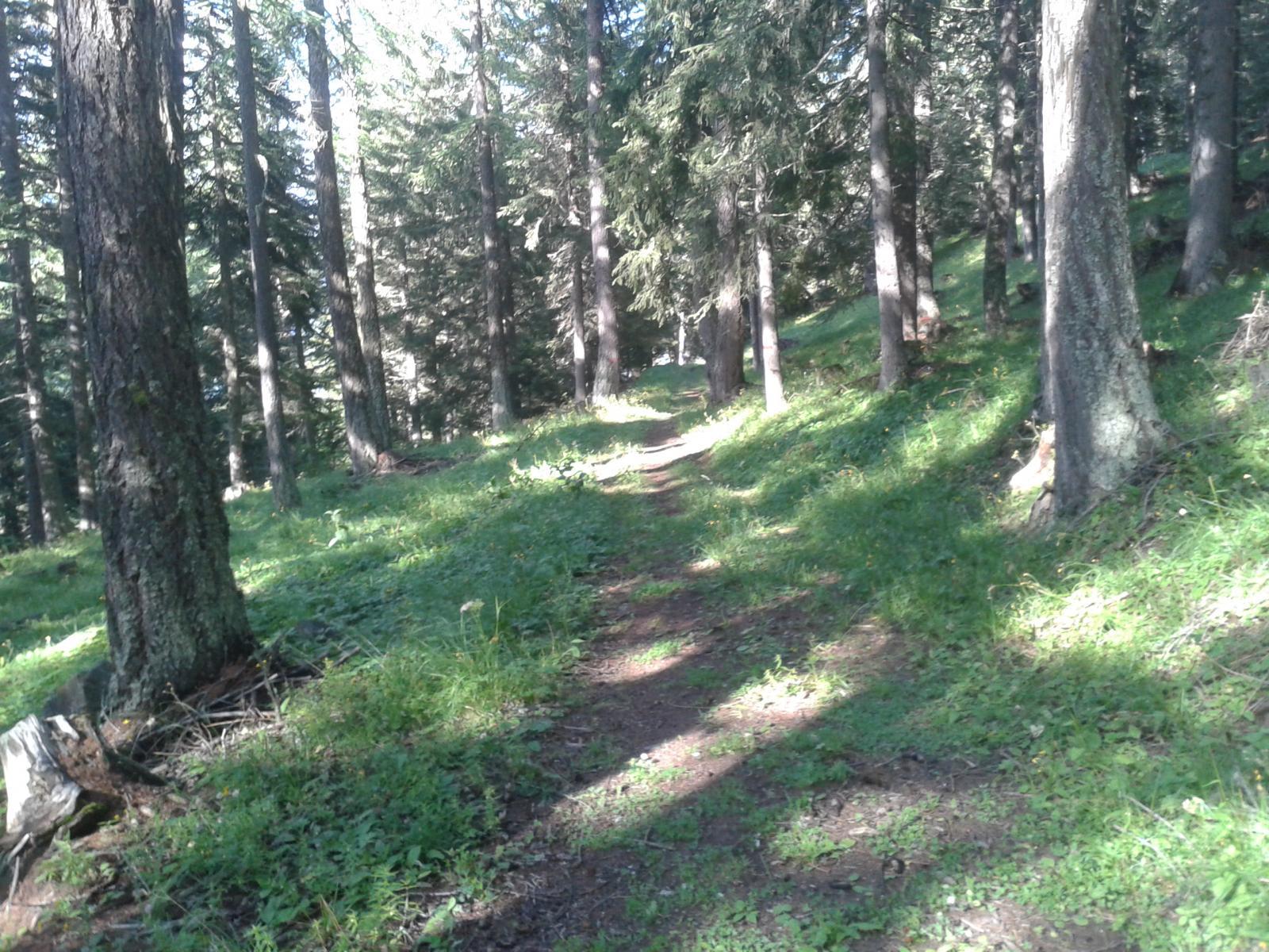 lo splendido sentiero n. 5