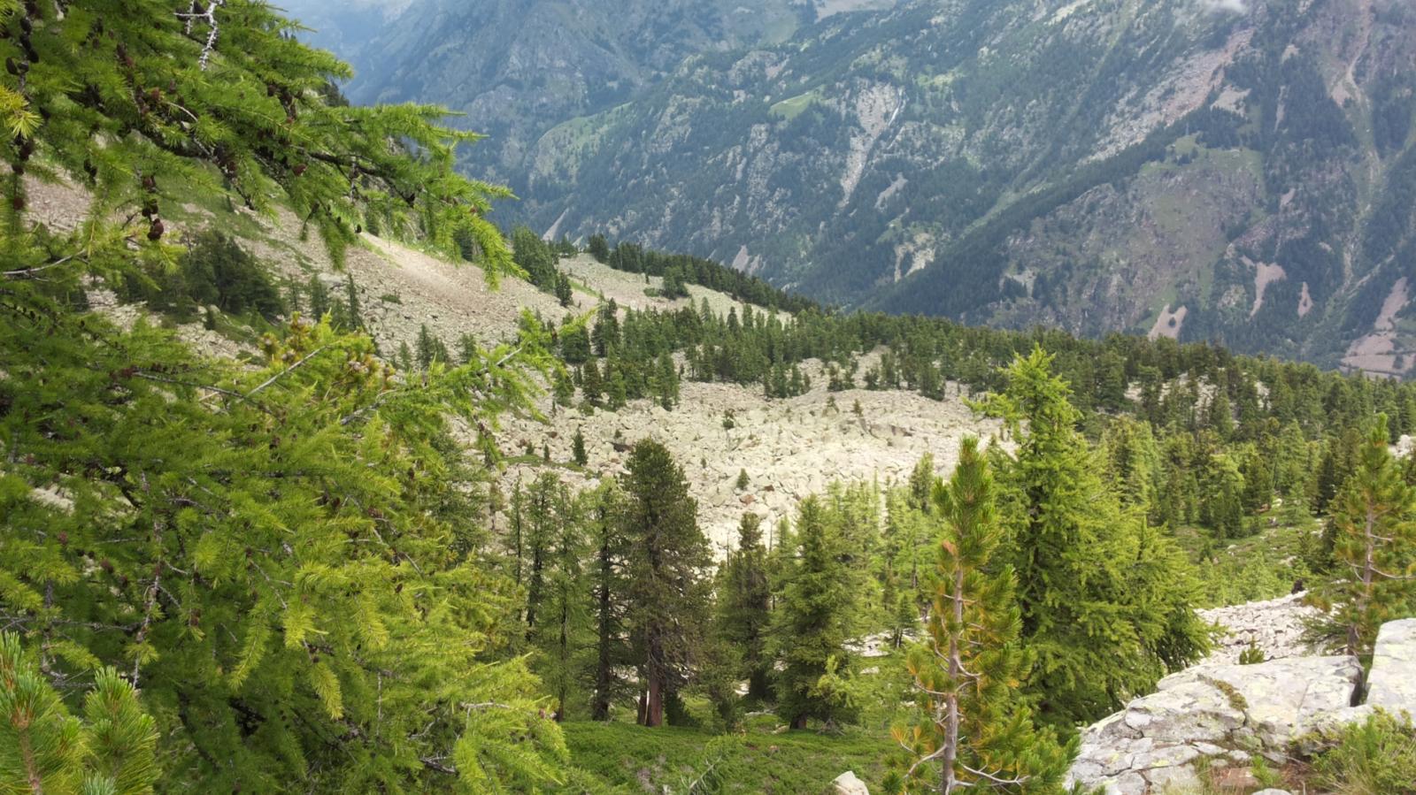 conifere e pietraie convivono benissimo